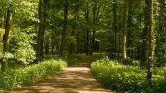 Tüschenbroicher Wald